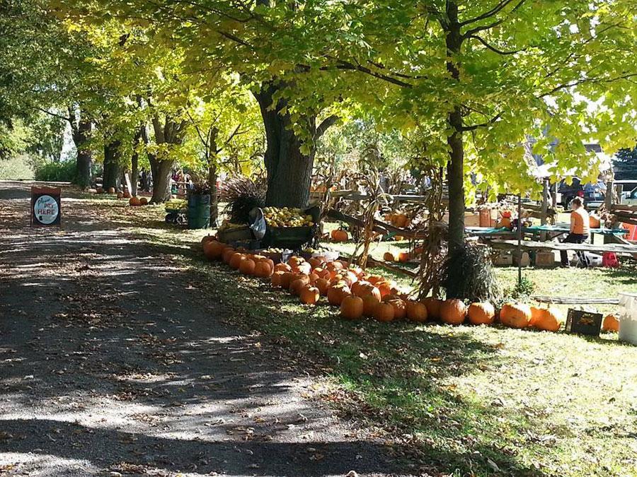 Knox Pumpkin Farm