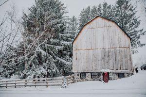 Hope's Christmas Tree Farm